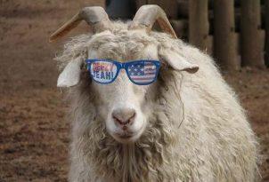 ryan-lochte-goat