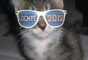 ryan-lochte-kitten