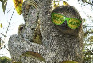 ryan-lochte-sloth